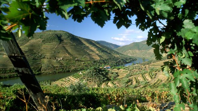 Vale do Douro - Rui Cunha