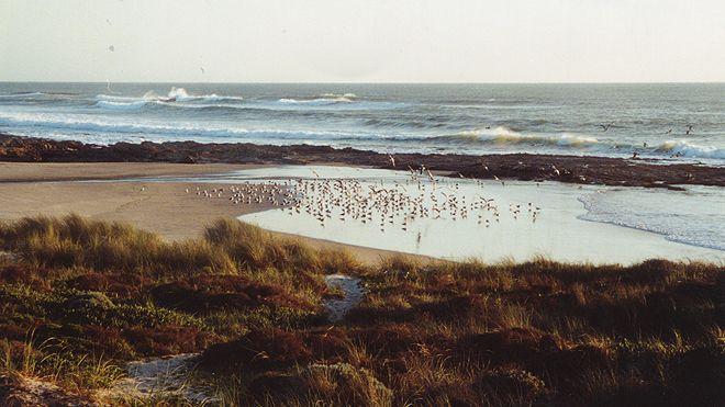 Praia de Morgável Place: Sines Photo: ABAE