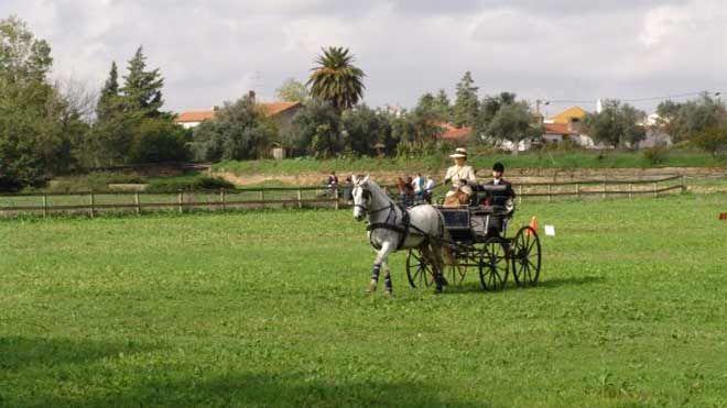 Feira Nacional do Cavalo - Golegã Ort: Golegã Foto: Feira Nacional do Cavalo