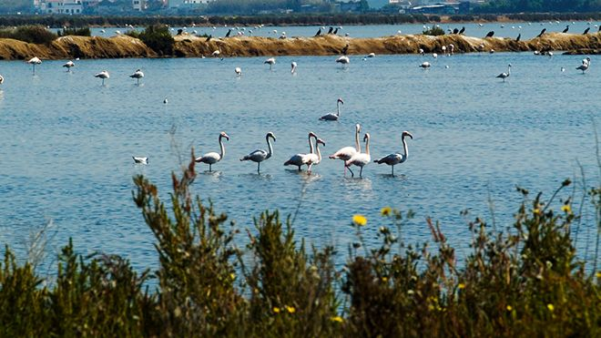 Flamingos Place: Ria Formosa Photo: Turismo do Algarve