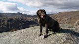 Cão de Castro Laboreiro - Parque Nacional da Peneda-Gerês Local: Melgaço Foto: CM Melgaço