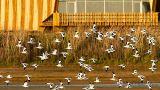 EVOA - Espaço de Visitação e Observação de Aves Place: Vila Franca de Xira Photo: EVOA