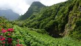 Vineyard Lugar Calheta Foto: Turismo da Madeira