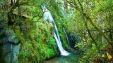 Wildest Nature Photo: Wildest Nature
