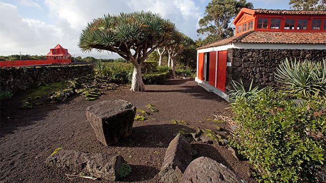 Museu do Vinho - Pico 場所: Pico 写真: Carlos Duarte -Turismo dos Açores