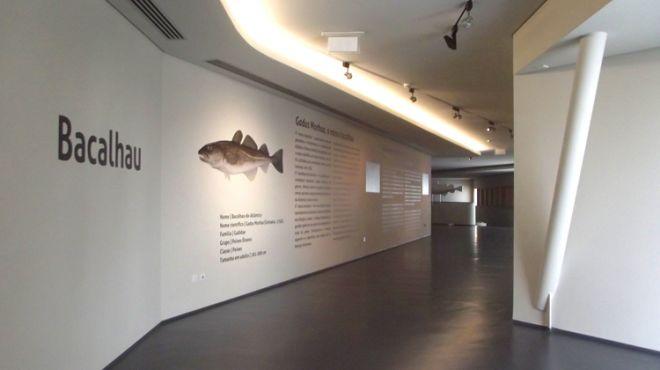 Museu Marítimo de Ílhavo_ Aquário dos Bacalhaus Local: Museu Marítimo de Ílhavo_ Aquário dos Bacalhaus  Foto: Museu Marítimo de Ílhavo