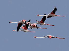 阿尔加维(Algarve)的鸟
