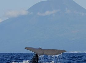 Whale and dolphin watching in the (...)