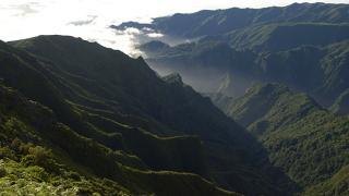 Floresta Lauríssilva Local: Madeira Foto: Turismo de Portugal