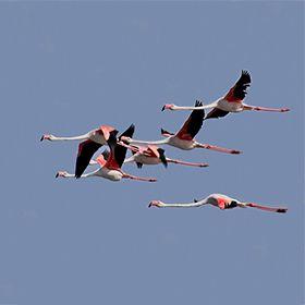 Aves do AlgarveOrt: AlgarveFoto: Joao Lara