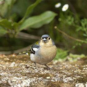 Espécies raras na MadeiraOrt: Floresta LaurisilvaFoto: Patrimonio Mundial