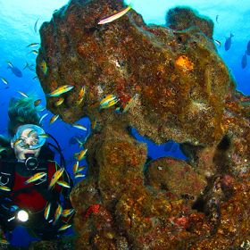 Mergulho地方: Açores照片: Turismo dos Açores / Nuno Sá