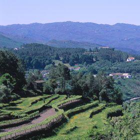 SoajoМесто: MinhoФотография: Turismo de Portugal