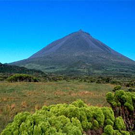 Pico