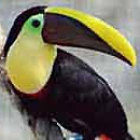 Zoolagos - Parque Zoológico de Lagos