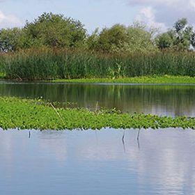 Reserva Natural do Paul de Arzila