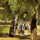 Lusitanos d'Atela - Coudelaria Bessa de Carvalho Place: Alpiarça Photo: Lusitanos d'Atela - Coudelaria Bessa de Carvalho