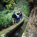 Levada Plaats: Madeira Foto: Turismo da Madeira