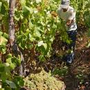 Vineyard Plaats: Madeira Foto: Turismo da Madeira