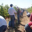 Winelands Tours & Travel