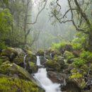 Queimadas 地方: Calheta/Madeira 照片: Gtresonline
