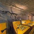 Museu Nacional de História Natural e da Ciência Local: Lisboa