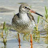 BirdwatchingFoto: Carvalho Pereira