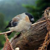 Centro Ambiental do PrioloFoto: Veraçor - Turismo dos Açores